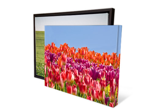 Gallery Wred Canvas Art